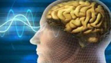 دودة الدماغ