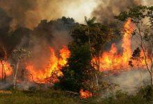 صورة نشوب حريق شديد في غابات الأمازون..الرئيس الفرنسي:هذه أزمة دولية