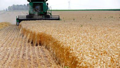 صورة قرار روسي يقضي بارتفاع أسعار القمح عالميًا