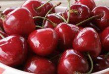 صورة مع دخول فصل الصيف..تعرف على فوائد فاكهة الكرز لجسمك
